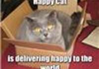 Happy_Catz