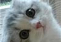 haroldthecat