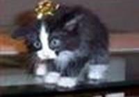 cheezburgersandcats