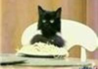 SpaghettiCat13