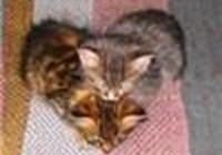 kittenklaws13
