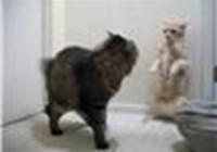 fencingcat
