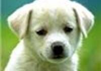 PuppyPup119