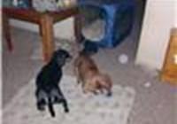 2longdogs