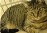 Meowcat232