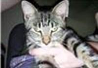 KittyKattle