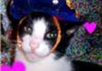 kitty4beans