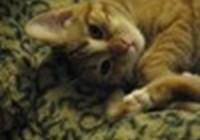 lynnecat