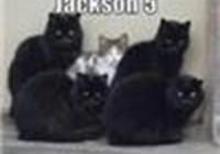 tabbycat234