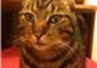 charliecat12