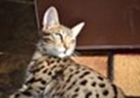 phat_cat
