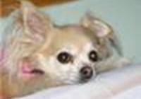 dogstargirl