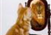 kittycomeplay123