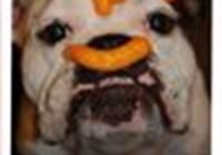 orsondogge
