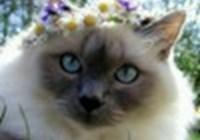 mizzsnikerz avatar