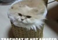 kitty-catz123