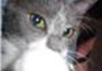 kittyboxorox