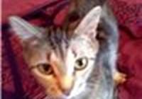 Kitty_Katie