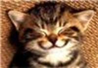 Happy_kitty