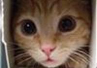 Fixeet avatar