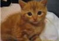 kit-cat2
