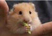 Hamsterz