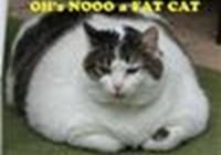 bladdercat