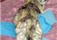 Opinionated_Pussycat