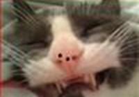 wonphatcat avatar