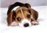 beaglesrule