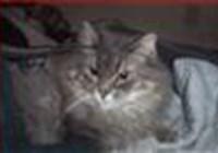 kitcats5