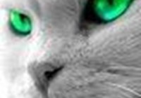 The-Green-Eyed-Kitteh