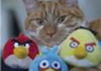 AngryBirdsRoxsTheWorld