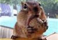 squirrelgirl13