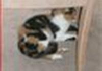 kitty_cat123