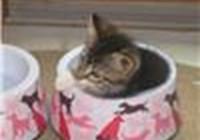 catty9800