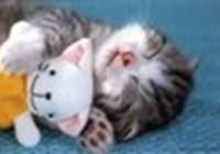 SleepyKitten