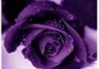 violetcandy86