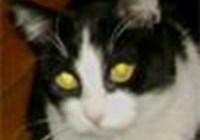 Baxcat
