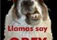 Llama12