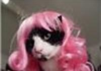 kittycatsrawesome avatar