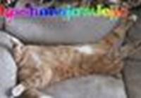 RainbowPew