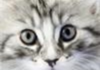 CatsRule3434