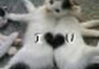 dhms2011 avatar