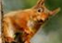 RedSquirrel2011