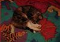ickycat