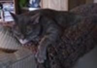 Catlady684