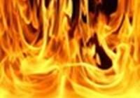 firebrony