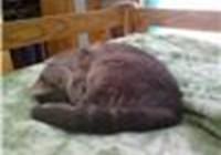 debjoy1 avatar