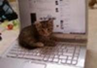Kitt-Katt101
